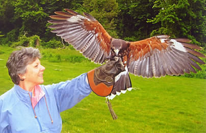 Falconry Demonstration